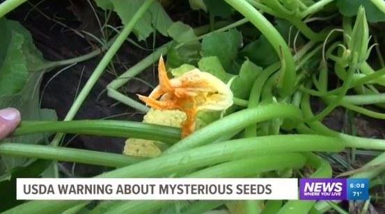 謎の種 植えてみた 花