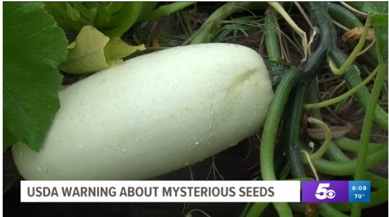 謎の種 植えてみた 実