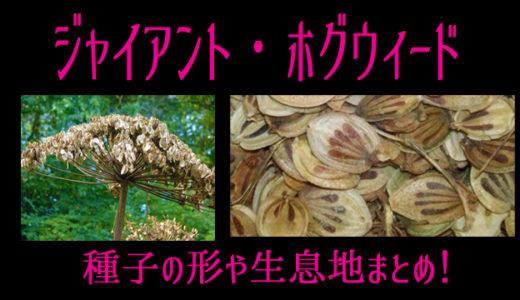 【画像】ジャイアントホグウィードの種子はどんな形?生息地はどこ?